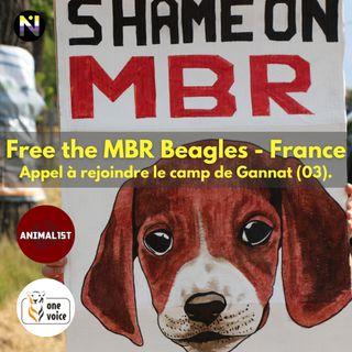 Free MBR Beagles - Gannat J1