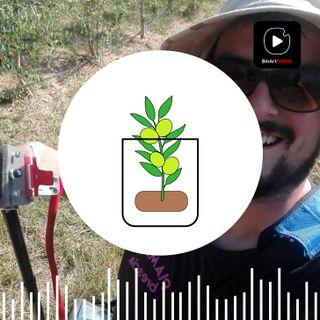Matteo e l'agricoltura - Creatività e Passioni #14