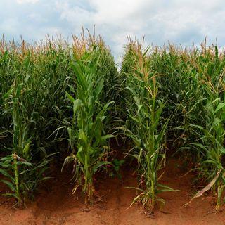 Impactos ambientales de la Fotovoltaica VS Agricultura intensiva #73