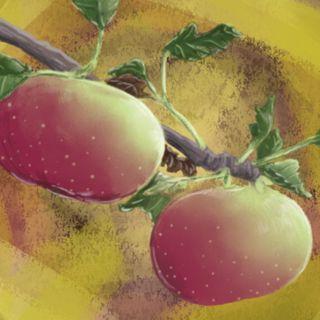 Pensieri dal territorio: La mela Rosa Romana, racconti sulla cura e protezione di beni fragili in estinzione