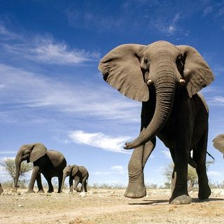 How relevant is the World Elephant Day in 2021? | UPSC CSE