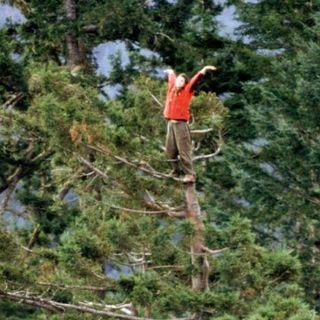 """#31 Ogni albero vale una barricata: storia del Parco Bassini e di Julia """"Butterfly"""" Hill"""