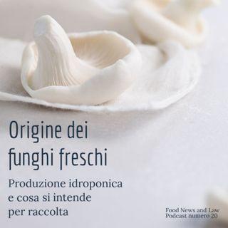 Origine dei Funghi freschi, la produzione idroponica e cosa si intende per raccolta.
