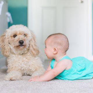 Kids and Dogs: Anna's Best Tips for Safety