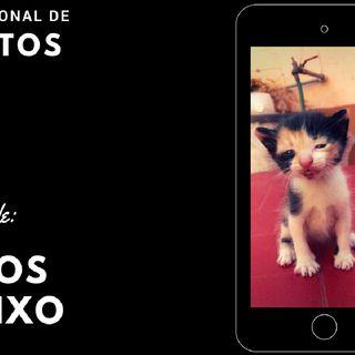 Dia internacional de los Gatos - 10 curiosidades 🐈