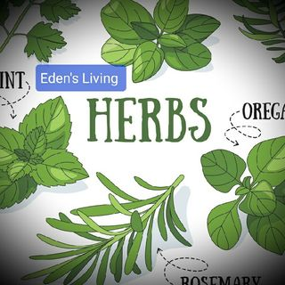 Herbs ~ A Few Pointers To Keep In Mind