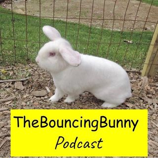 Welcome to The Bouncing Bunny Podcast - TBB#1