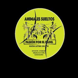 ANIMALES SUELTOS - PASIÓN POR EL PADEL (10)