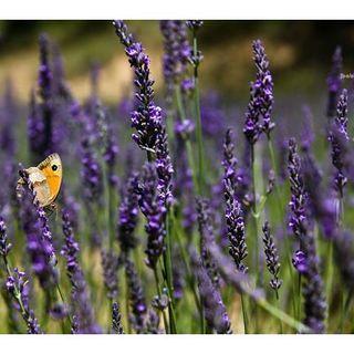 Herbs, Our Wonderful Healers