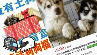 Pay $2 Get a Random Dog in a Box in China - Most Die - Episode #60
