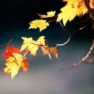 #mi οἷά τε φύλλα, come le foglie