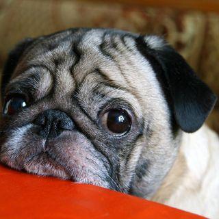 Episodio 20 #NadieMeCreePero, TOP 5 LOS ANIMALES MÁS LONGEVOS, SABÍAS QUE? MARATÓN ROCAMORA Y MÁS…