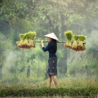 Un suolo sano per sconfiggere la fame invisibile