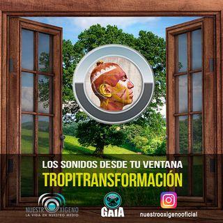 NUESTRO OXÍGENO Los sonidos desde tu ventana-Tropitransformación - Héctor Buitrago