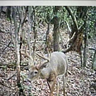Episode 18: Public Land Hunting, Mock Scrapes, and Season So Far