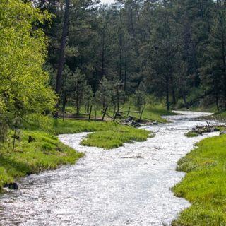 The Bigfoot Of Ole' Saint Joe… A Scary Encounter At Meadows Creek!