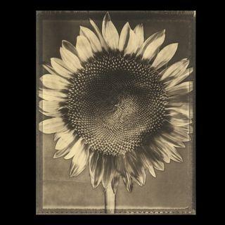 Tom Baril :: Polaroid Type 55 Works