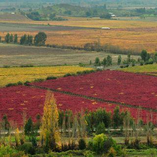 Ep 203: California Fires / Rapel Valley, Chile