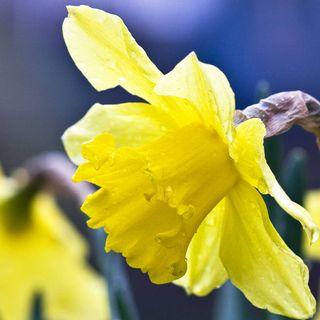 Vägen till nästa påsk, Godisbevakningen ser dig & Vi säger, Moss! till döden. Glad Påsk!