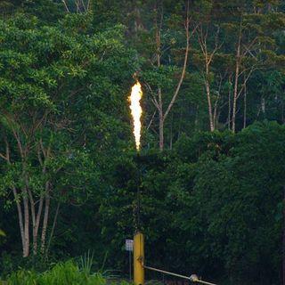 Cos'è il gas flaring che sta minacciando l'Amazzonia in Ecuador