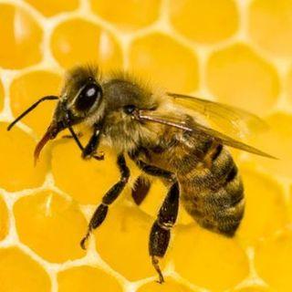 NUESTRO OXÍGENO Servicios de las abejas - Victoria Eugenia Fajardo