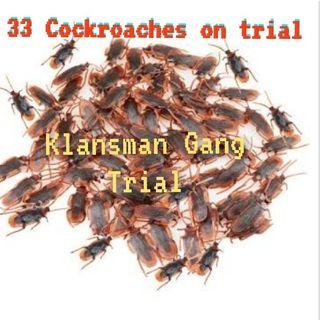 Gang Trials