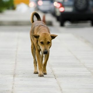 """Campagna di sensibilizzazione """"contro abbandono animali"""""""