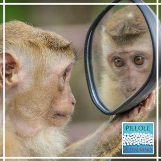 La parola - Scimmia