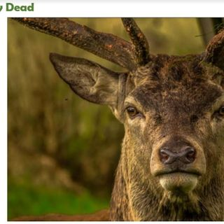 Beware the Green Deer