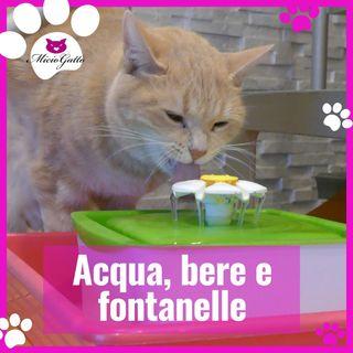 Acqua e gatti: quanto bere e fontanelle!