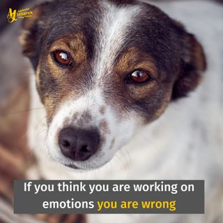 Episode 9: If you think you are working on emotions you are wrong