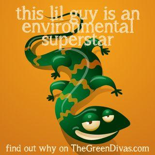 Salamanders are Environmental Superstars