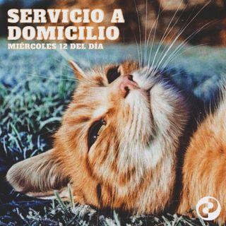 Servicio a domicilio 99