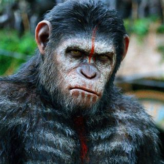 #24 Dawn of the Planet of the Apes