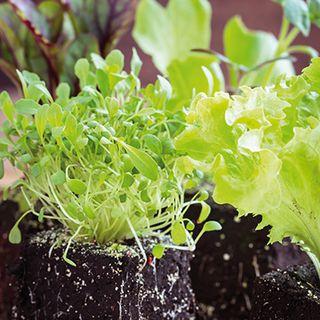 Les semis, point de départ du potager