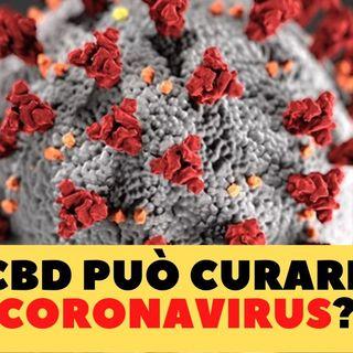 CBD e Coronavirus - Il Cannabidiolo Può Curare Il Coronavirus