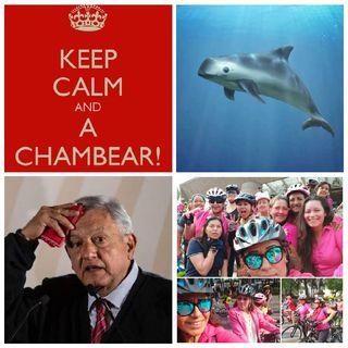 100 días con AMLO, Historia de Chambear, Vaquita Marina - Delfín Rosado, Rodada de Altura, 8 de Marzo.