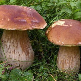 #bg Bimbo raccoglie un fungo sul sentiero: multato!