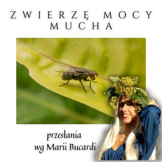 Zwierzę Mocy - Mucha - spotkanie z Maria Bucardi