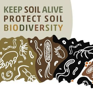 Un simposio mondiale sulla biodiversità dei suoli