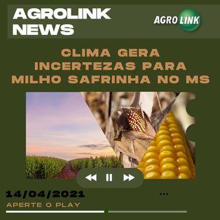 Podcast: Clima traz incertezas para milho safrinha no MS