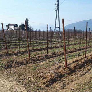 Tarcento Società Agricola viticola Colli Orientali