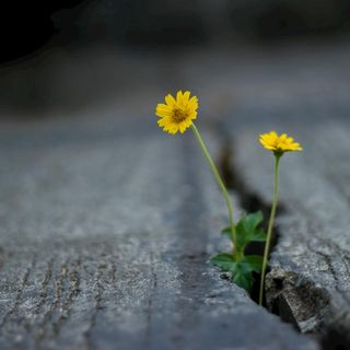 Cómo ser optimista ante un panorama de inseguridad