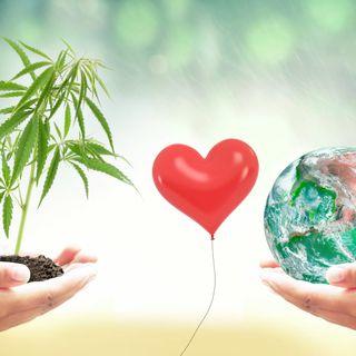 La verità sulla cannabis in diretta su Rai IsoRadio