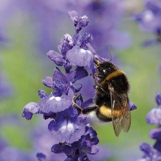 La pollinisation, base d'un jardin comestible productif