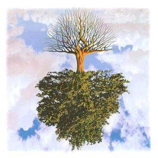 Ogni albero si riconosce dal suo frutto