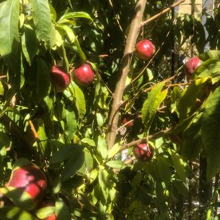 From Nuttin to Nectarines-Homefulness Where MamaEarth&PoMamas Can Breathe