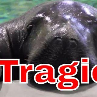 Horrible Death of an Aquatic Legend - Mildly Interesting News