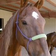 05-Autism and Horseback Riding Research