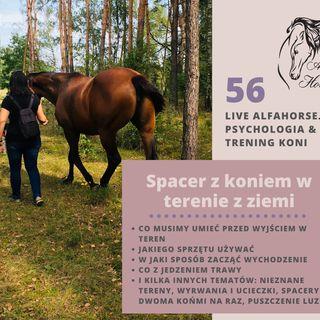 Live 56: Spacery z koniem w teren z ziemi